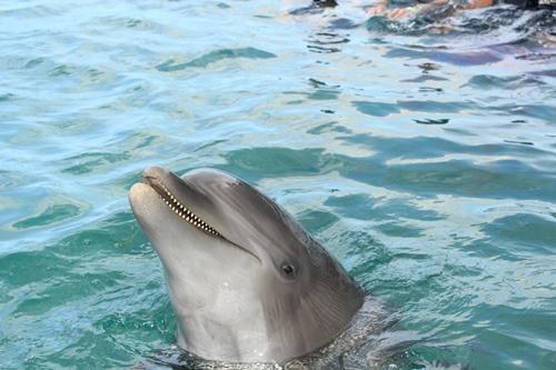 dolphin cove2