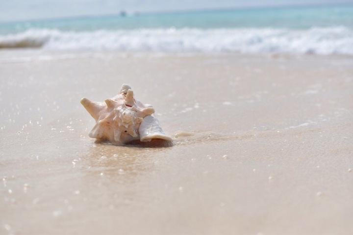 Governor's Beach
